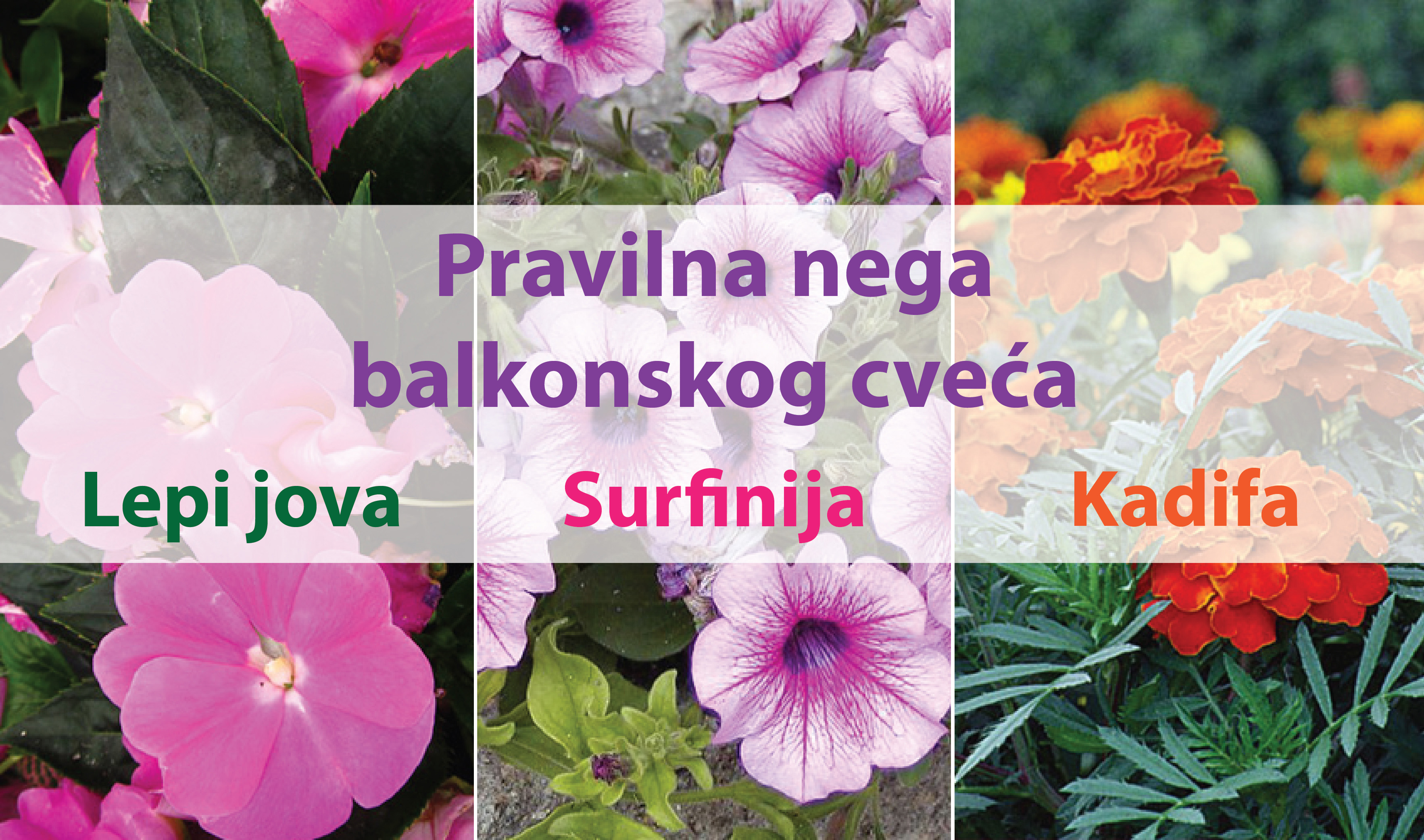 Kako negovati balkonsko cveće tokom leta