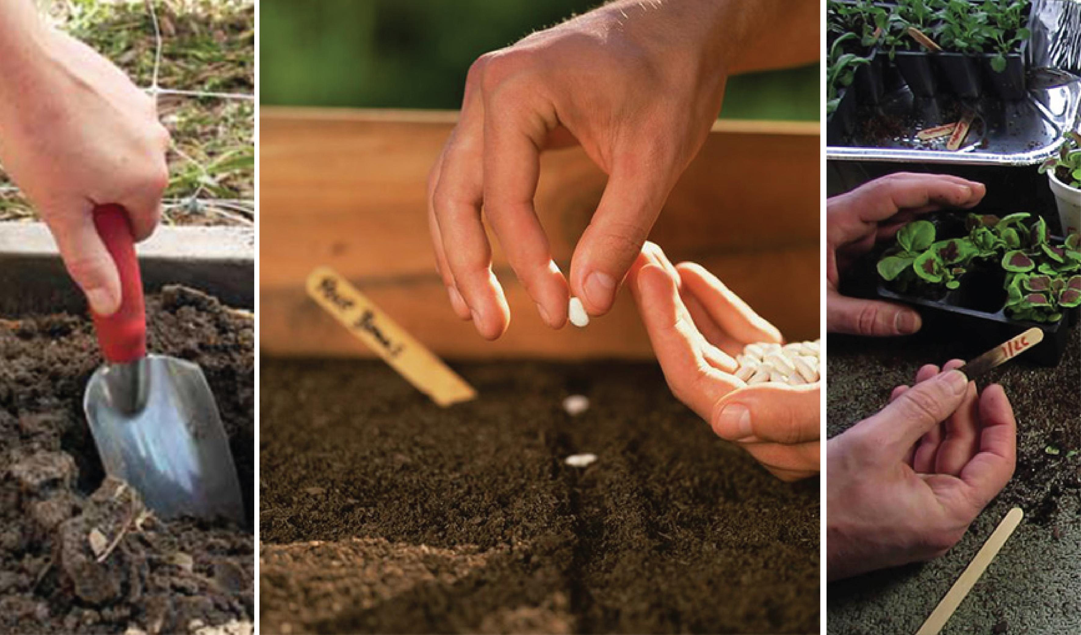 Kako pripremiti zemlju za sadnju cveća?
