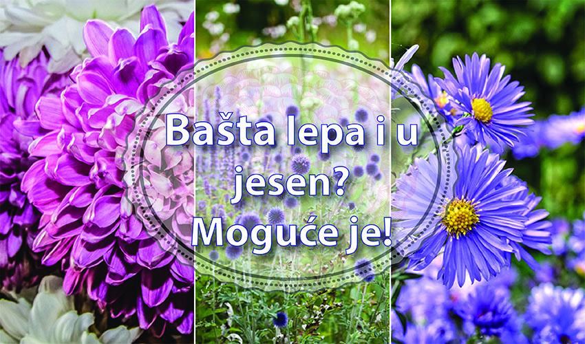 Top 3 cvetnice za vaš jesenji balkon