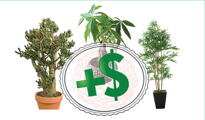 Gajite ove tri biljke i problemi s novcem će nestati!