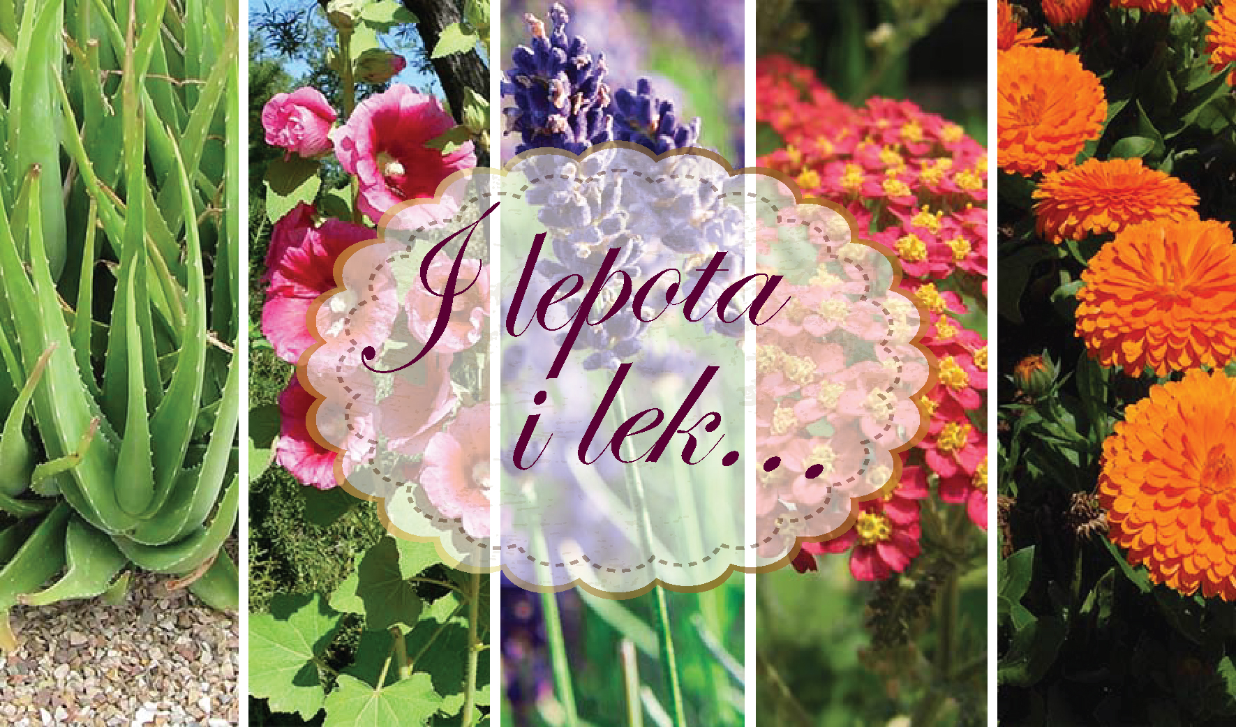 5 lekovitih biljaka koje su i dekorativne