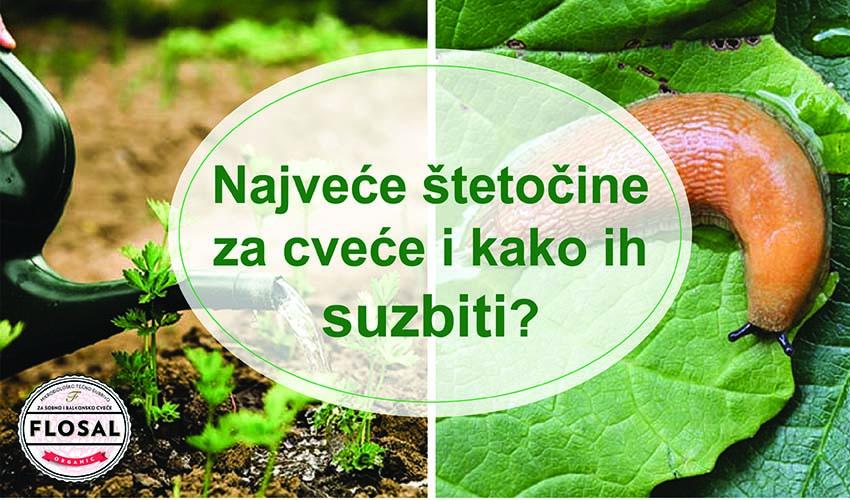 Kako zaštititi cveće od različith vrsta štetnih uticaja?